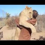 【涙腺崩壊】幼いライオンを救った男性。野生に戻ったライオンに数年ぶりに会いに行くと、ライオンの見せた反応に世界が涙する・・・